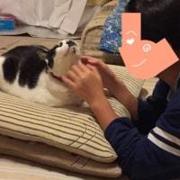 モーちゃんが…   ('◉⌓◉lll)