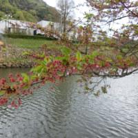 さすがに葉桜