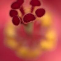 東山植物園で出会った花