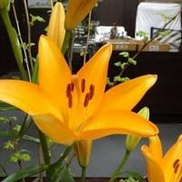 市長室の花(4月17日)
