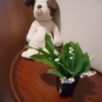 お気に入りの白い花