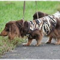 秋色散歩♪