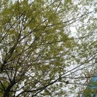 気持ちの良い 緑の木