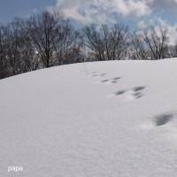 雪山さんぽ