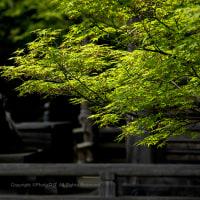 花山院 新緑