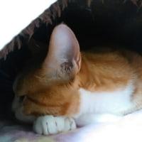 猫ベッドの中ニャ~