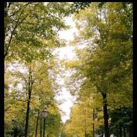 2016年10月 秋のアルザス~シュバルツバルト旅行 2