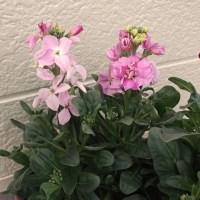 園芸・ガーデニング  1月の玄関