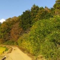 高崎自然の森:紅葉