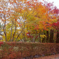 富士山麓の紅葉