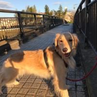 明るい犬の人生