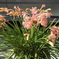 路地に咲いてる2月の花