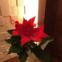 ☆クリスマス☆