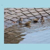 過ぎし夏ボストンの鳥水浴びて
