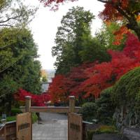 11月18日のまち 飯能・能仁寺で つづき