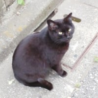 黒猫さんの写真を撮った
