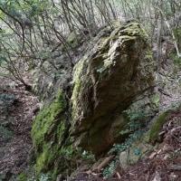 滋賀県小谷山ハイキングその2