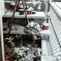 おはようございます!すごっ!!雪!!!