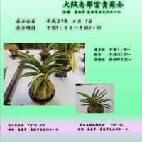 大阪南部富貴蘭会  春季展示会