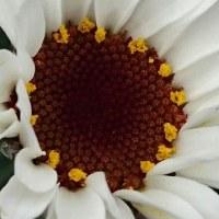 蕾も少しずつ花が開きだして・・・