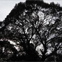 1月19日(木)やっぱり寒い・・・