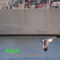 佐世保港の鳥たち