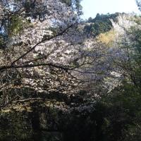 角田山(湯の腰コース)