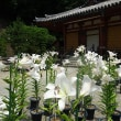 奈良少年刑務所と松尾寺のユリ