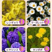 Rs:アンケート 3月に咲く花の中でお気に入りに花はどれ?