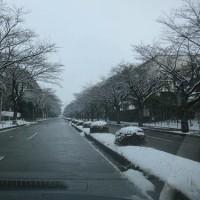 宇都宮の雪