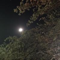 月は・・・どっちに・・・