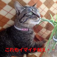 春は野菜をたくさん食べたい季節です!・・けど・・猫スタッフのこだわりには参ります