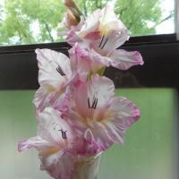 淡いピンクの花が優しく微笑む♪