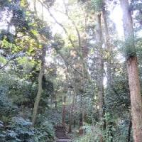 鎌倉山裏道