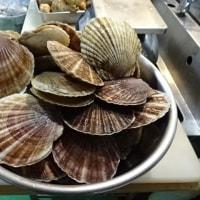 帰ってきた漁師のいっちゃん♪白老で、どでかい「活ツブ」&「活ホタテ」・「松川がれい」とったど~!!発寒かねしげ鮮魚店の魚屋しげ。