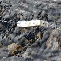 昨日、禁漁間際の日曜日、丹波川村営釣り場前へ釣りに 小イワナ君が釣れました