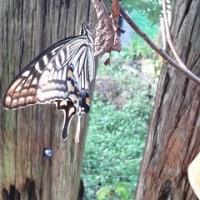 蝶って人懐こいですね