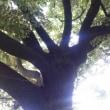 教えてくれた木