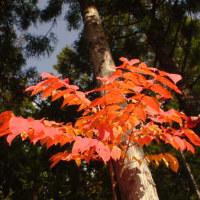 今日の紅葉、、