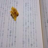08愛読書『はてしない物語』をもう一度読み直し、今までの知識と経験を加味し咀嚼する。