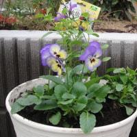 秋の庭はなごり花で混み合います・・・・心を鬼にして引き算!そして 球根を植えます♪