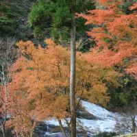 2016年12月2日(金)養老渓谷の粟又の滝から渓谷を下る。