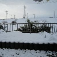 てまり3個完成 雪が積もりました 8cmだそうです