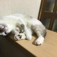 猫と玉の輿の日