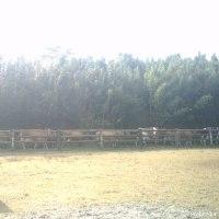 牧場の風景つづき