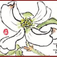 ハナミズキと亀戸天神の藤