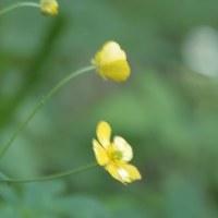 初夏の山里に 弾ける生の花々を眺めていると生きている実感を味わううれしさ