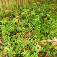 庭の花たち開花