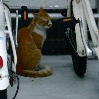 最近であった猫たち MC5235-3691b