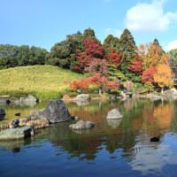 名残りの紅葉(大仙公園 日本庭園)